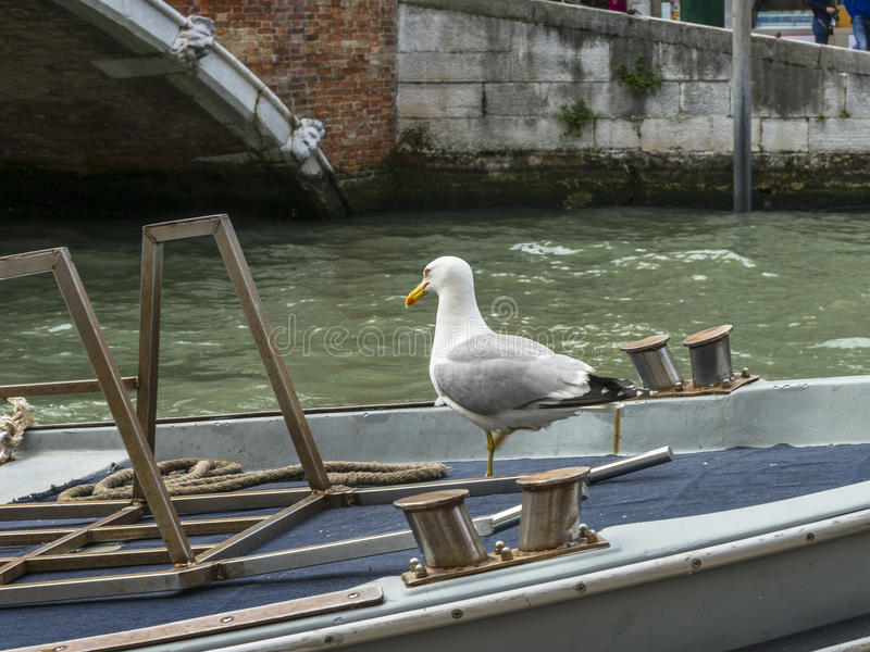 Venice in Italy. Small canal in Venice , Italy , Europe. End of Venice . Seagulls on the boat stock photos