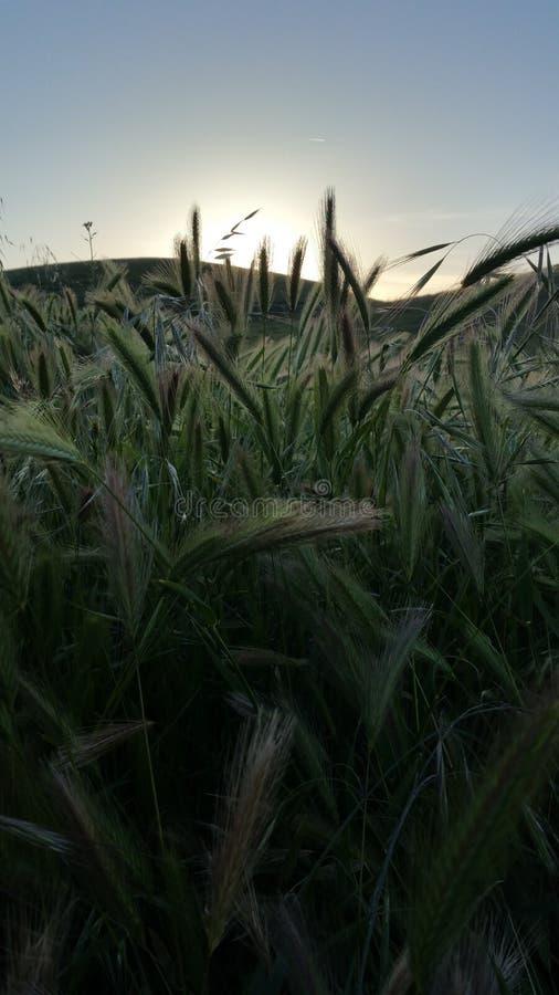 Venir de coucher du soleil photo stock