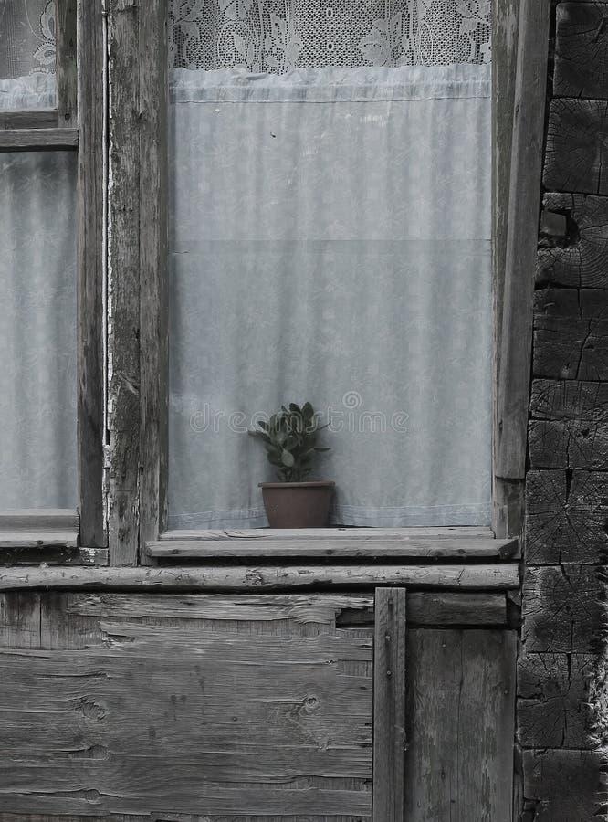 Venster in een oud blokhuis met een bloem op de vensterbank royalty-vrije stock afbeelding