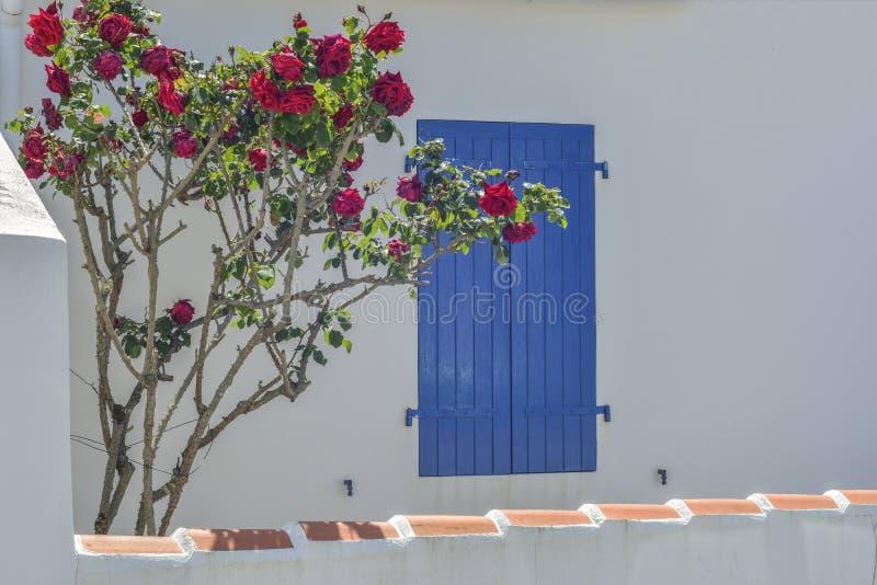 Venster met blauwe blinden, rozenbloemen stock fotografie