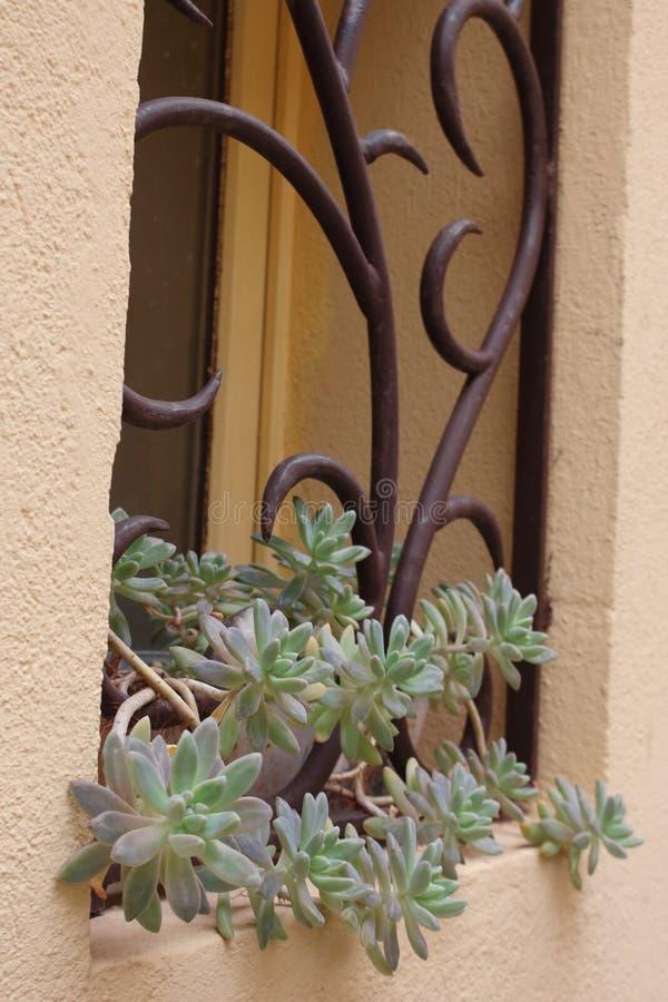 Venster met gebogen gesmede staven ijzer en een potten succulente plant royalty-vrije stock foto