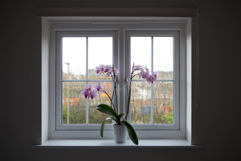 Venster met orchideepot royalty-vrije stock foto's
