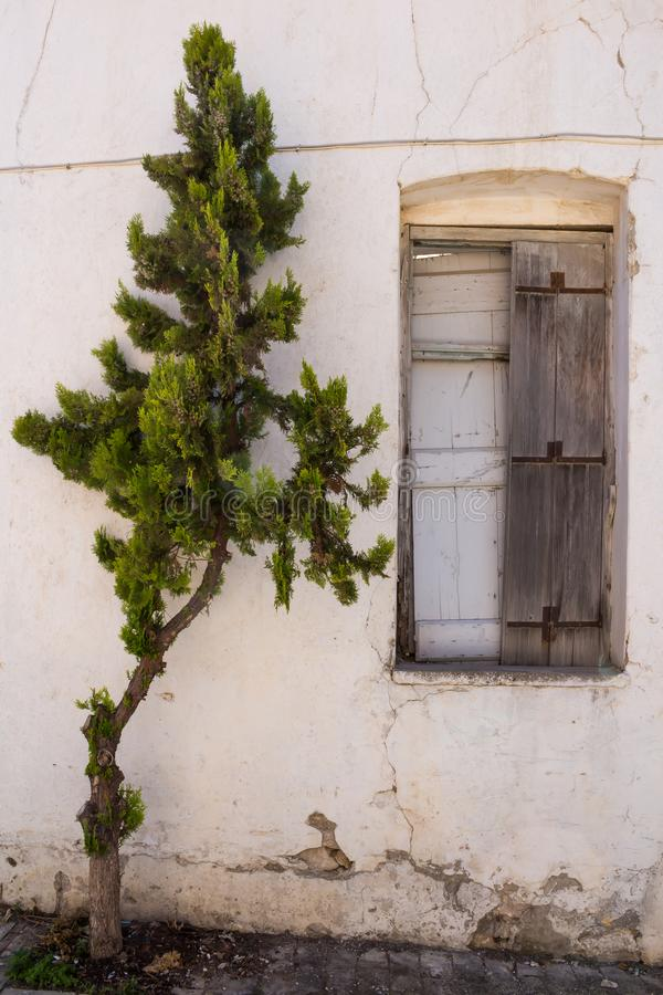 Venster van een verlaten huis en een pijnboom stock foto's