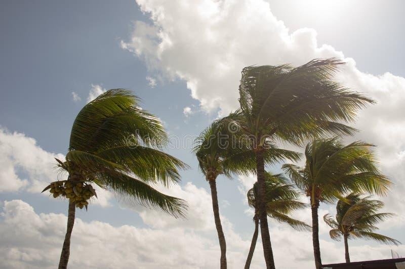 Vent soufflant par des palmiers photographie stock
