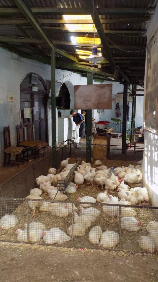 Venta de Tetouan de pollo-Marruecos fotografía de archivo libre de regalías