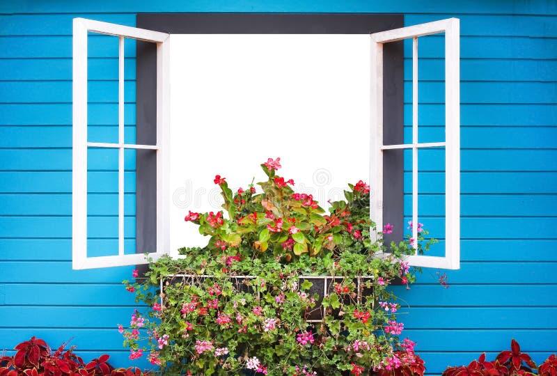 Ventana abierta con las flores coloridas y los tablones azules brillantes en fondo de la pared imágenes de archivo libres de regalías