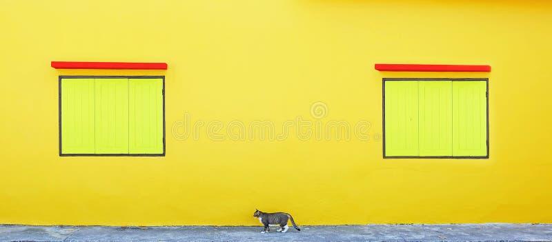 Ventana amarilla dos y un gato foto de archivo