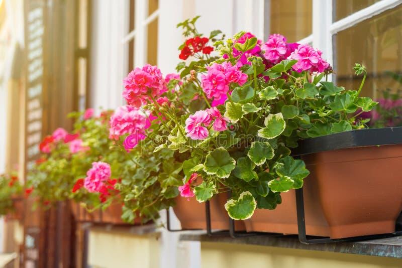 Ventana con las flores en casa italiana, ventanas con las flores fotografía de archivo libre de regalías