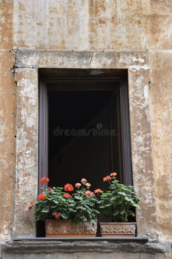 Ventana con las flores en Roma, Italia. imagen de archivo libre de regalías