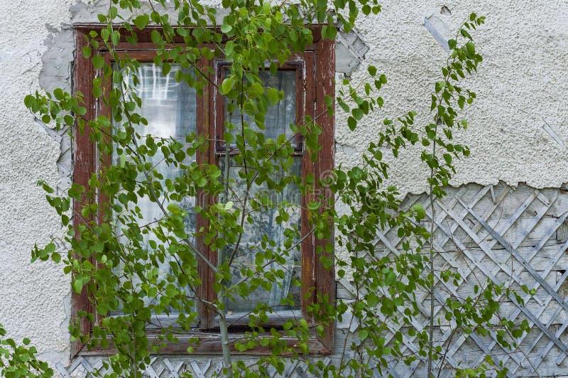 Ventana de madera de Brown en una casa vieja detrás de los árboles fotos de archivo
