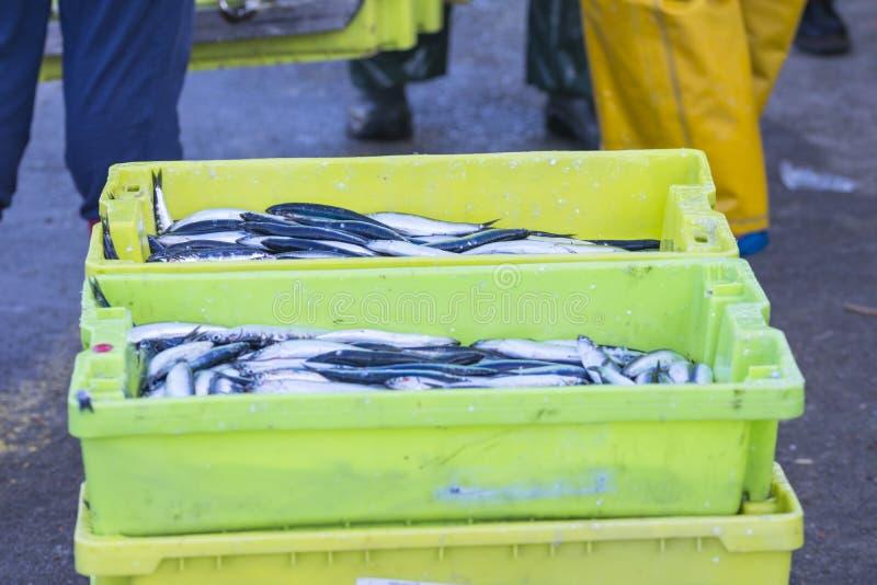 Vente de scombrus de Scomber, verdel, cavalla, sarda, anchois photographie stock