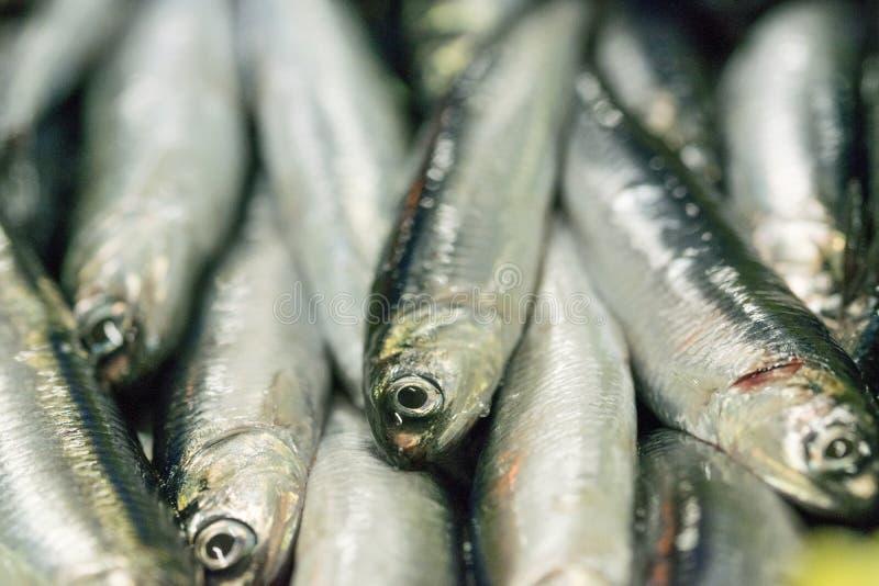Vente de scombrus de Scomber, verdel, cavalla, sarda, anchois images libres de droits