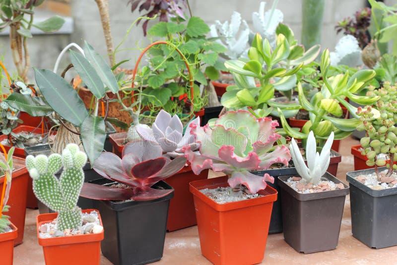 Vente des cactus et des succulents photographie stock