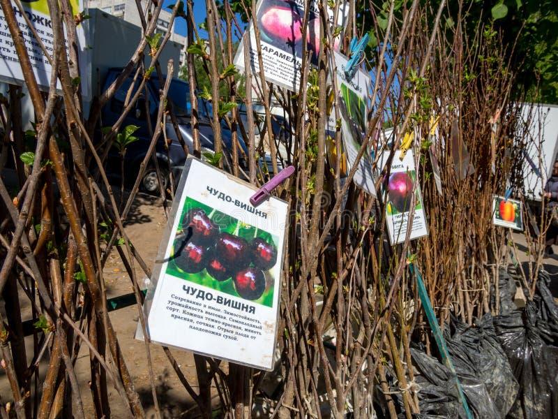 Vente des jeunes plantes d'arbre fruitier sur le marché en plein air photographie stock libre de droits