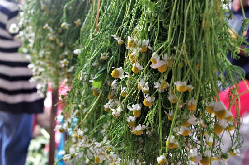 Vente traditionnelle de fleur de Tegucigalpa Honduras Chamomille du marché photographie stock libre de droits