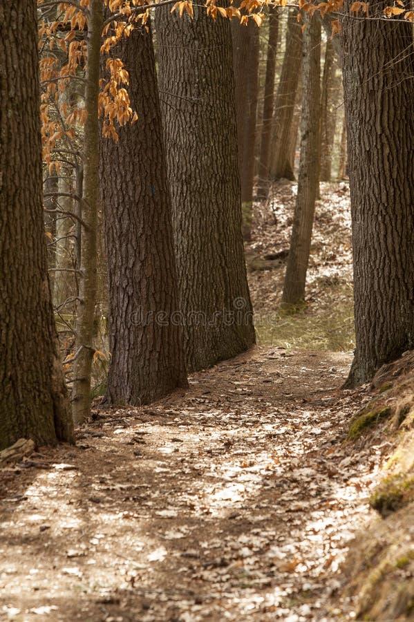 Venti del percorso della sporcizia fra gli alberi immagini stock libere da diritti