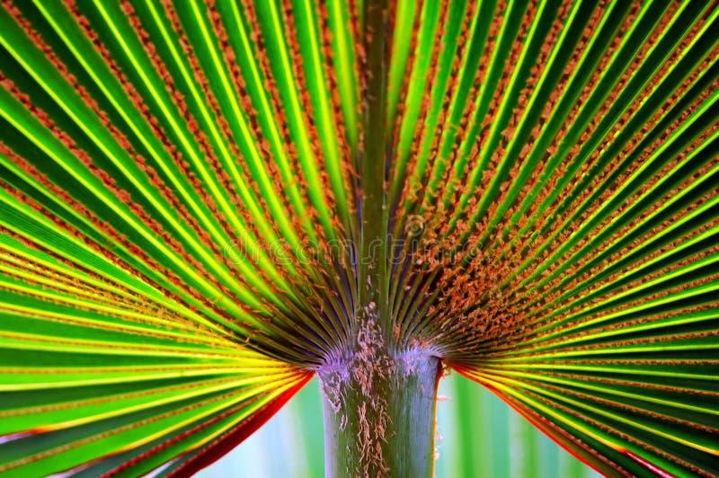 Ventilador em folha de palmeira foto de stock