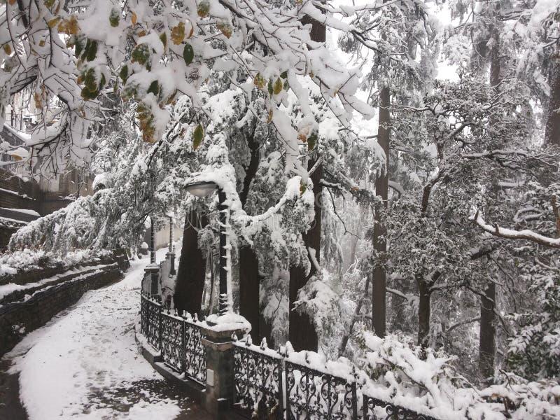 Ventiladores de neve foto de stock