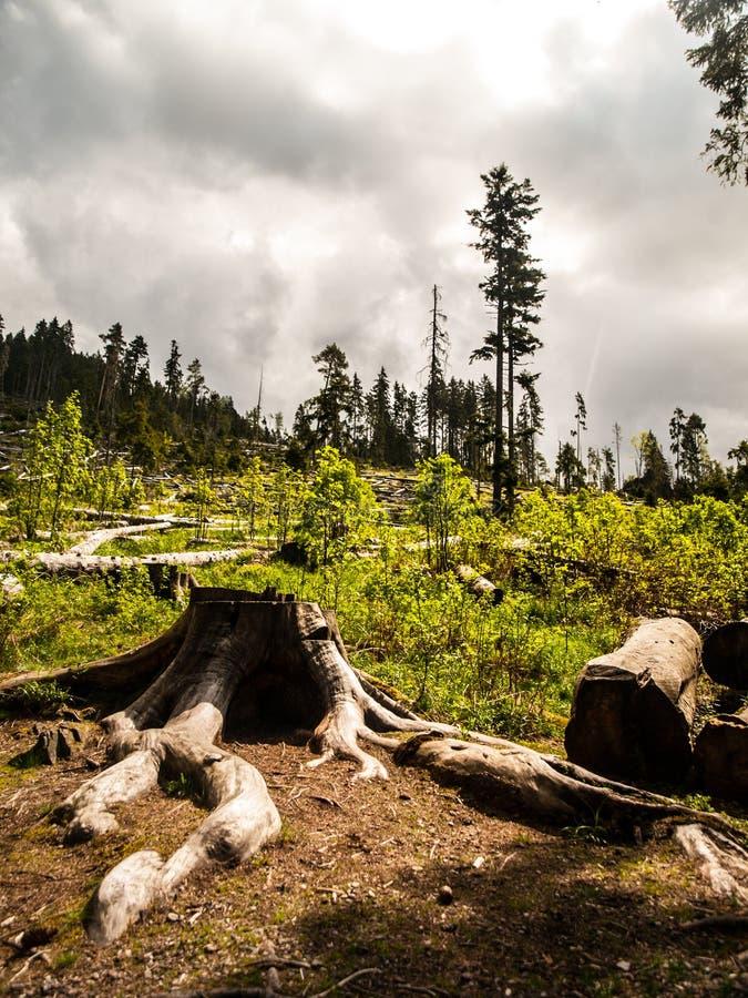 Ventis dans la forêt après tempête photographie stock libre de droits