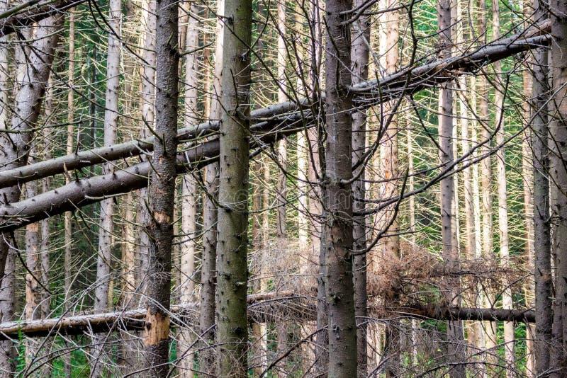 Ventis dans la forêt impeccable photographie stock