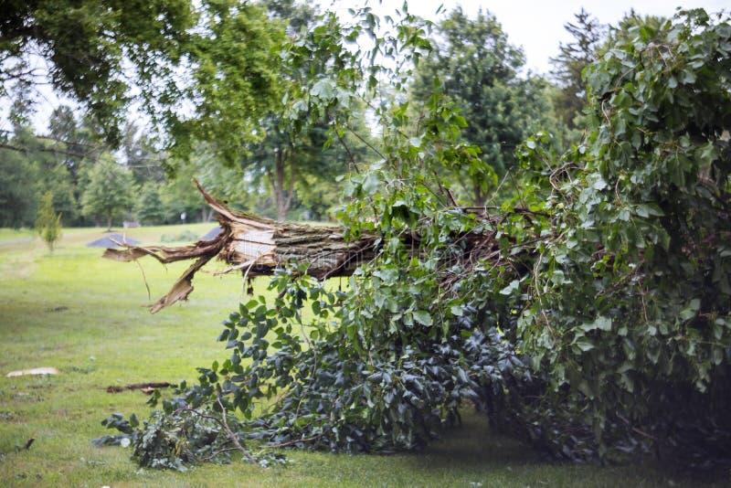 Ventis dans les arbres tombés par dommages de tempête de forêt dans la forêt après ouragan fort image libre de droits