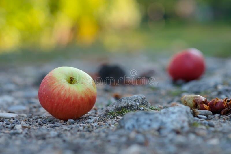 Ventis rouges de pomme sur une route de voie photographie stock libre de droits