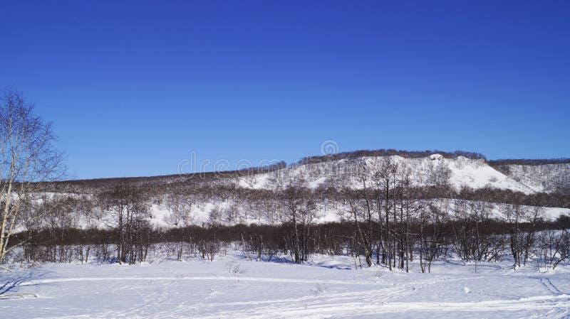 Ventiseiesimo gennaio, 2019 - foresta di inverno nella città di Viljucinsk, penisola di Kamchatka, Russia immagini stock