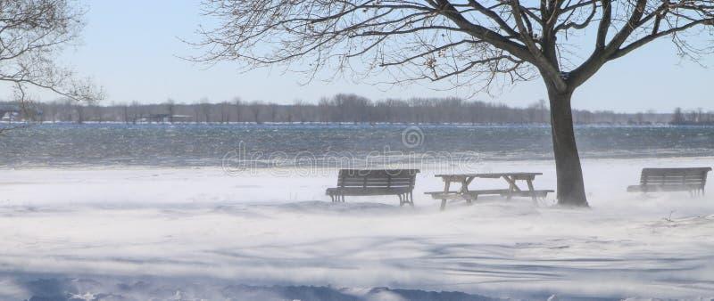 Vento di inverno accanto al fiume fotografia stock libera da diritti