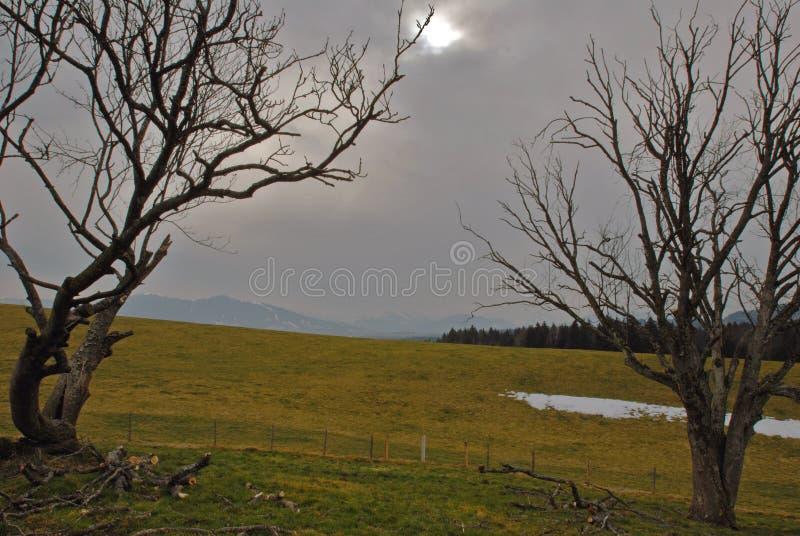 Vento Do Inverno Imagem de Stock