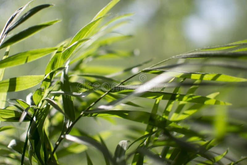 Vento in foglie delle palme fotografia stock libera da diritti