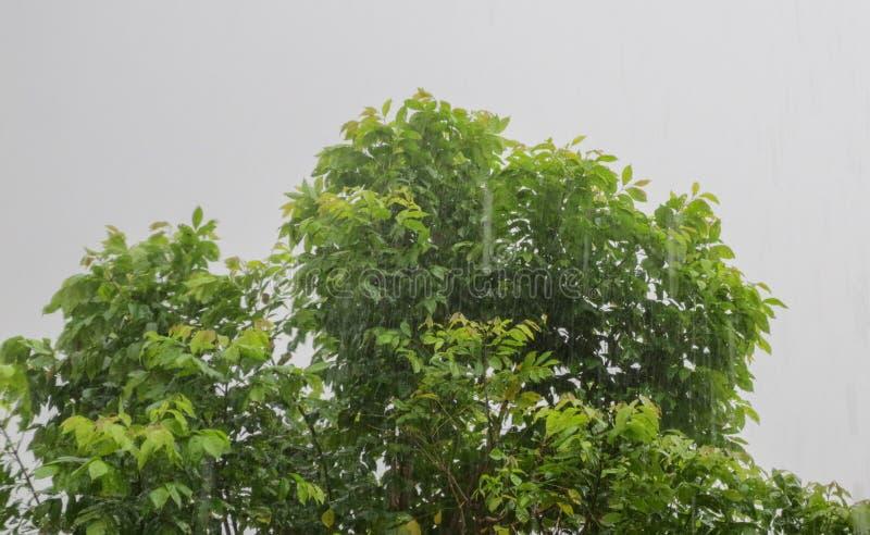 Vento pesante sull'albero fotografia stock libera da diritti