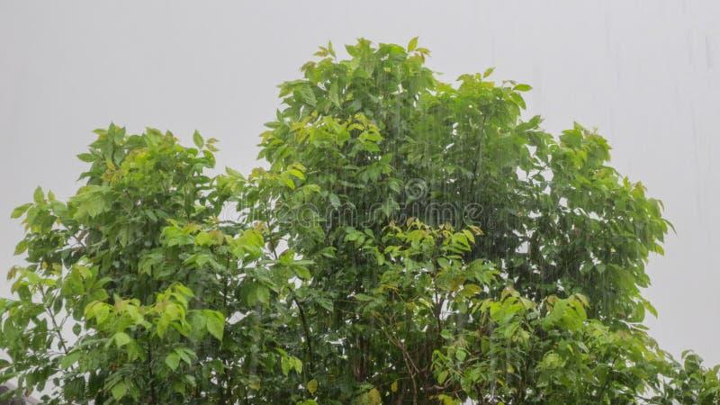 Vento pesante sull'albero fotografie stock libere da diritti