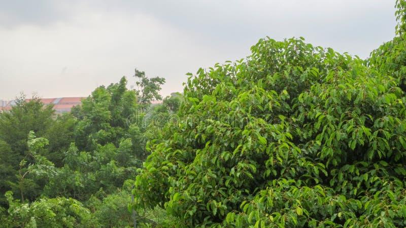 Vento pesante sull'albero immagine stock libera da diritti