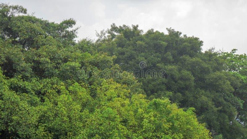 Vento pesante sull'albero immagine stock