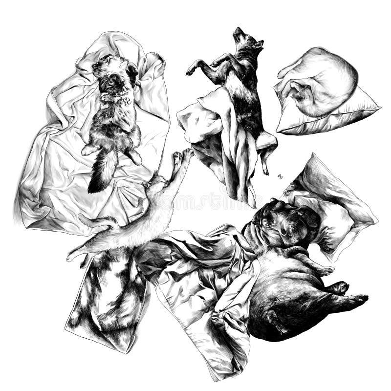 Ventre de chien d'hippopotame de chats de vue supérieure de sommeil d'animaux autour des serviettes et des oreillers couvrants de illustration de vecteur