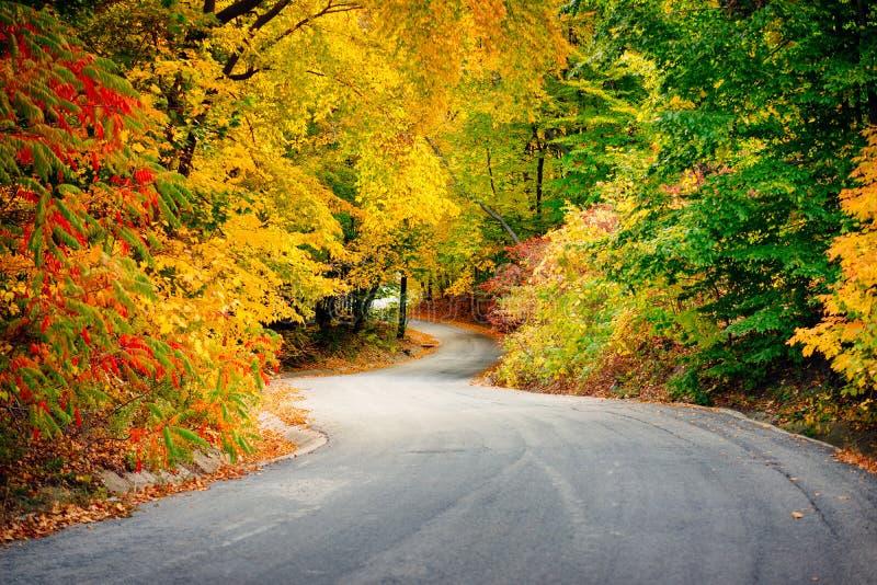 Vents d'une route par des arbres dans des couleurs d'automne photo libre de droits