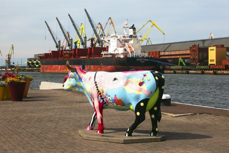 Ventspils, Letónia - August 11, 2018: Uma de muitas vacas no fotos de stock