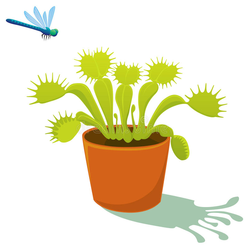 Download Venus flytrap stock vector. Illustration of leaf, venus - 15551291
