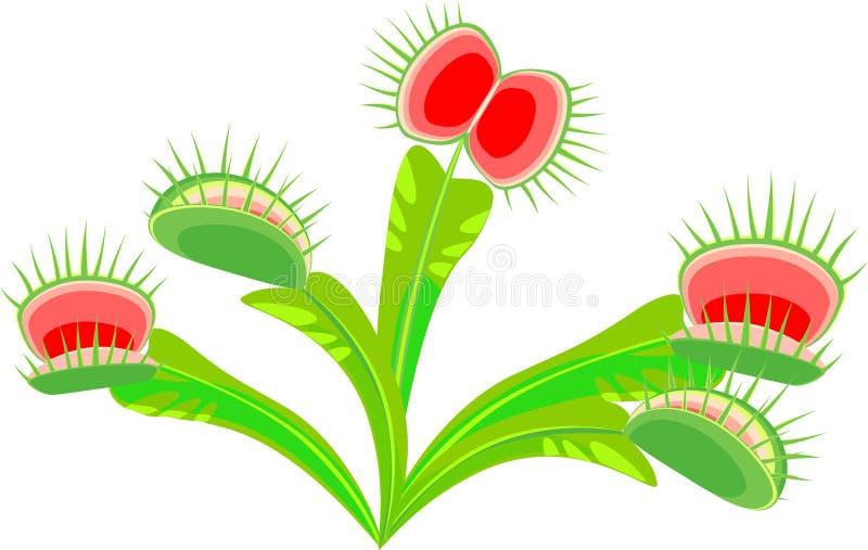 Venus Flytrap illustration stock