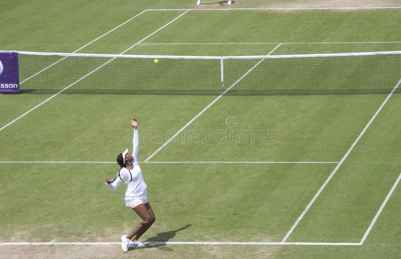 Venus Williams fotografia stock