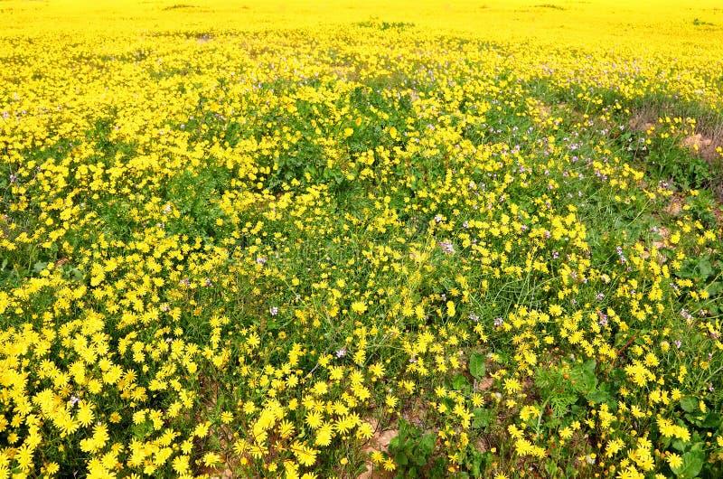 verão amarelo fotografia de stock