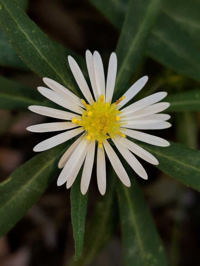 verão da flor consideravelmente delicado foto de stock