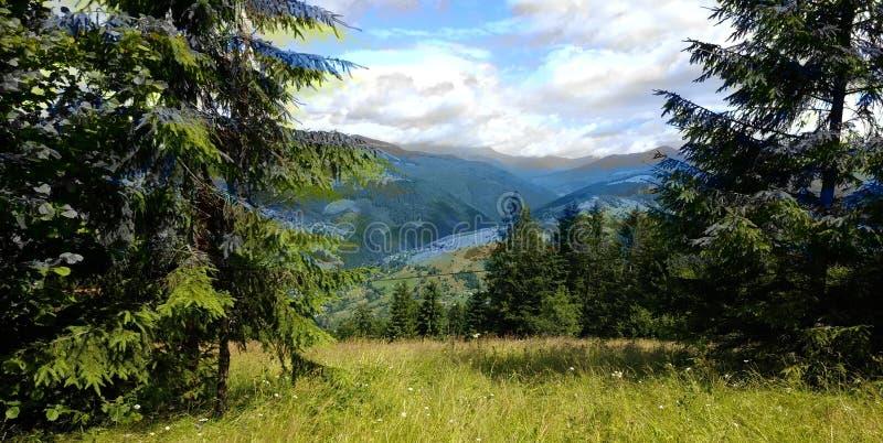 verão da natureza de Carpathians foto de stock royalty free