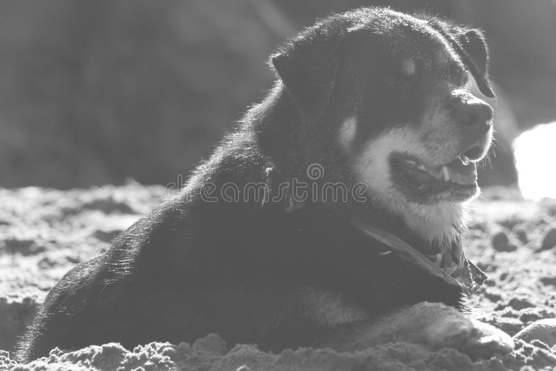 verão da praia da vida de Pooch Dog imagens de stock royalty free
