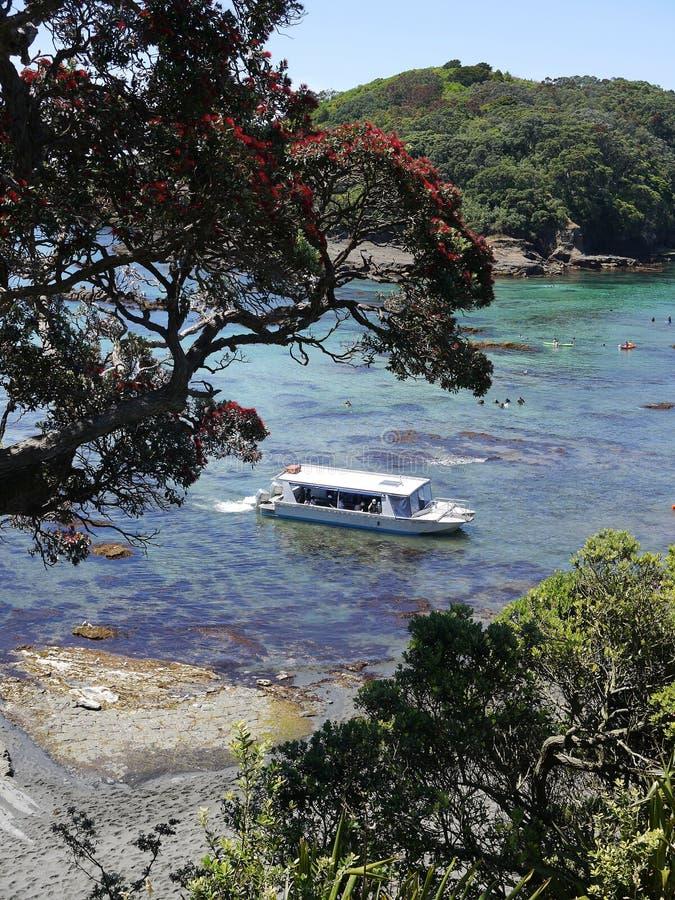 Verão de Nova Zelândia: barco de turista na reserva marinha fotos de stock royalty free