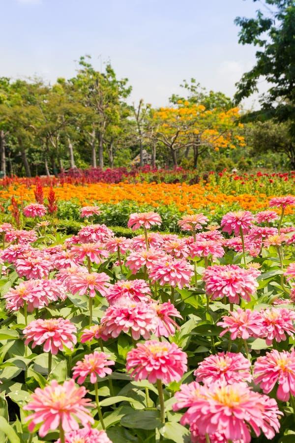 verão do campo de flor foto de stock royalty free