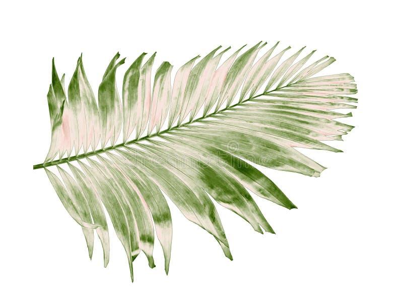 verão do conceito com folha de palmeira verde de tropical fronda floral imagem de stock