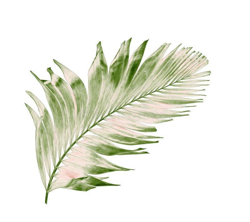 verão do conceito com folha de palmeira verde de tropical fronda floral fotos de stock