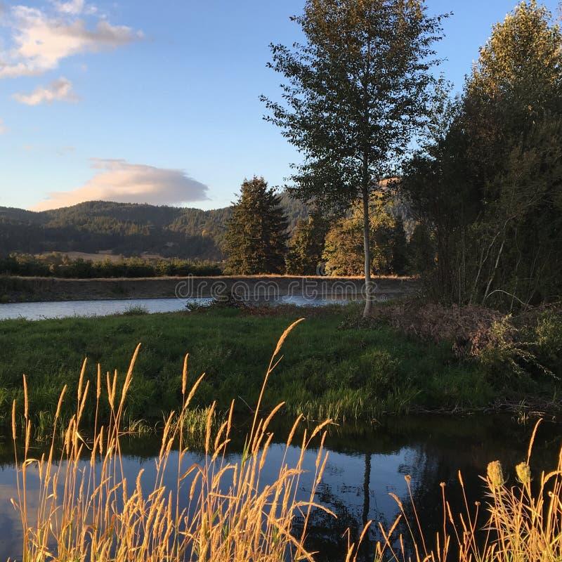 verão do vale de Willamette imagem de stock