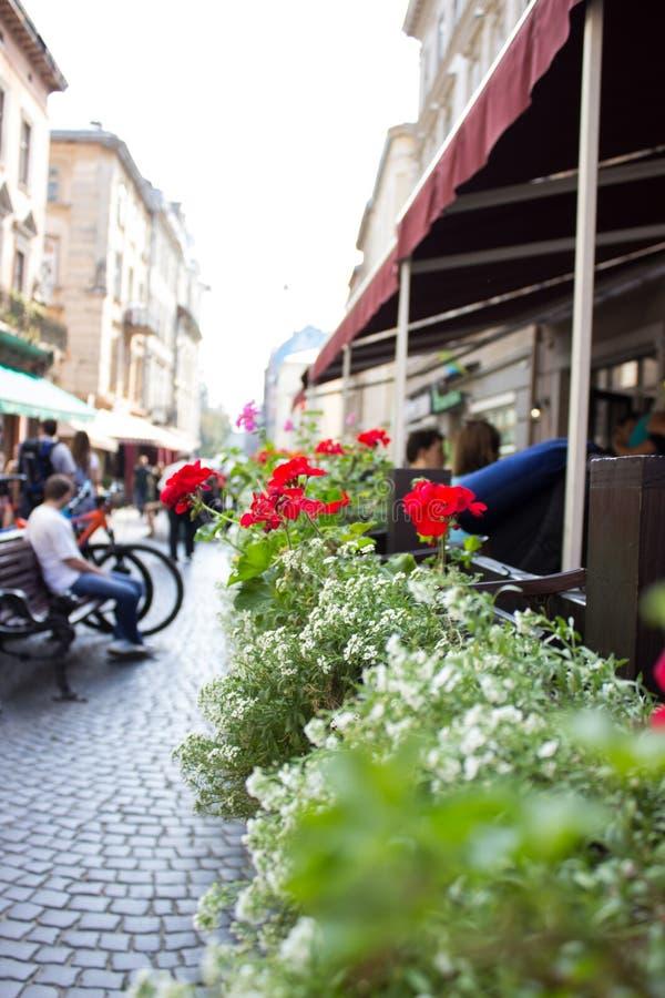 verão do vaso de flores do café imagem de stock royalty free